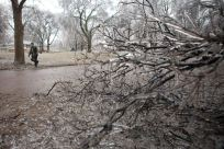 Ice coats a tree on Tuesday, April 9, 2013, in Sioux Falls, South Dakota, as a passerby tries to clear a fallen branch from the street. An early spring storm walloped South Dakota early Tuesday, bringing everything from rain, thunder and lightning to heavy snow and strong winds. (AP Photo/Amber Hunt