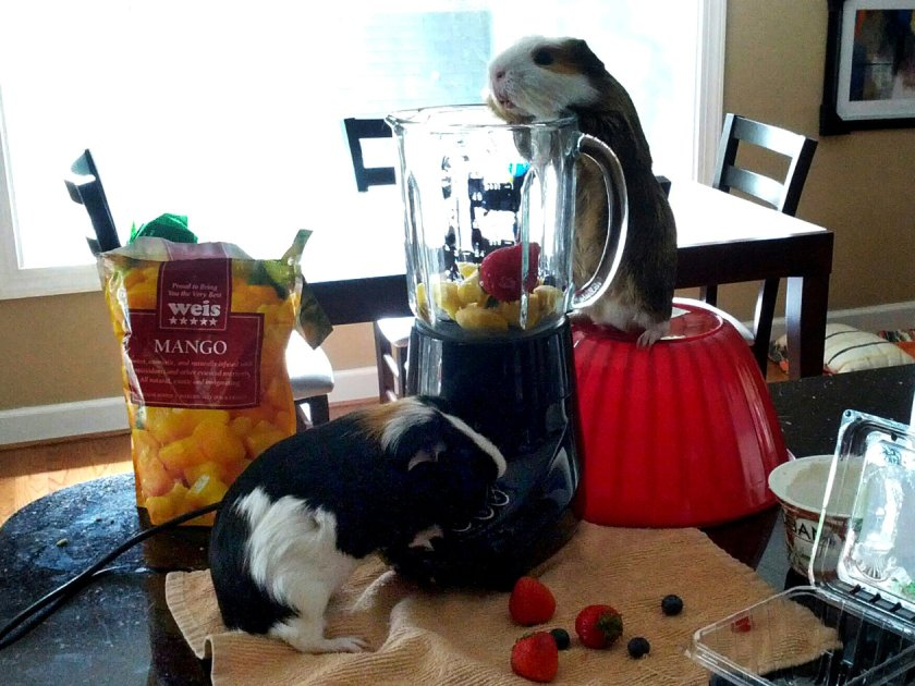 Sam and Chester making a fruit smoothie