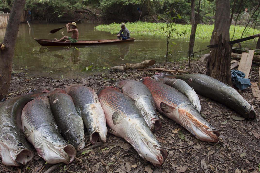 рыбалка на самую крупную рыбу в мире видео