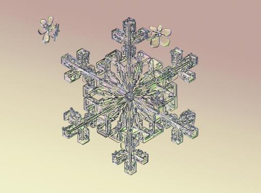 Macro view of snowflake. (Valeriya Zvereva/CATERS NEWS)
