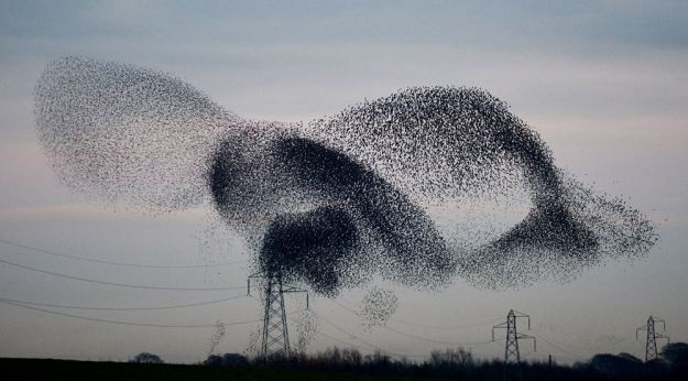 The small birds perform a ballet dance as they swoop and glide in the sky. (PA)The small birds perform a ballet dance as they swoop and glide in the sky. (PA)