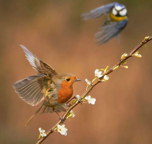 'Springtime Rivalry' by Martha Cabey