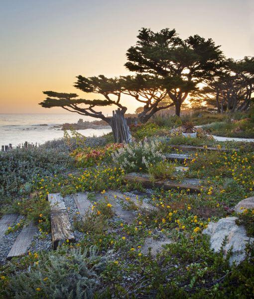 'Native Coast' by Jason Liske