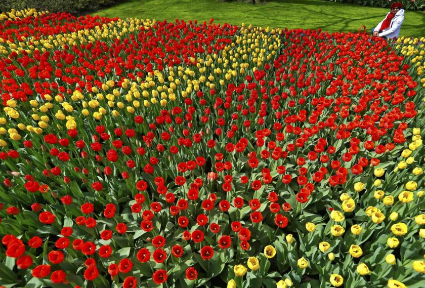A visitor sits next to tulips at the Keukenhof park also known as the Garden of Europe, in Lisse, the Netherlands April 9, 2014. (REUTERS/Yves Herman)
