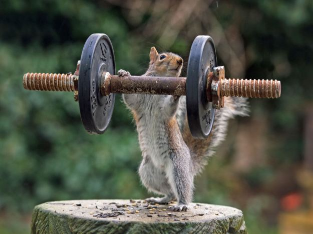 Weightlifter. (Max Ellis/CATERS NEWS)