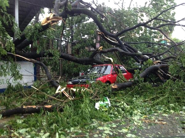 Strong winds from Typhoon Glenda (Rammasun) uprooted a decades-old tree which fell on a red car.