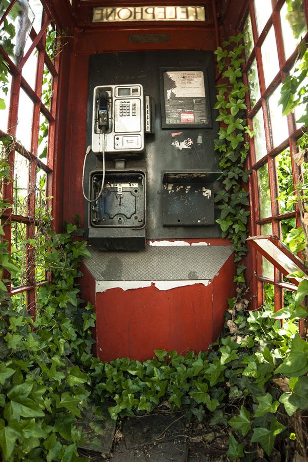 A derelict red phonebox, a famous British landmark, is covered in ivy in this shot taken by Philip Braude. The picture, captured in London, came top in the 'Botanical Britain' category (PA/British Wildlife Photography Awards 2014/Philip Braude)