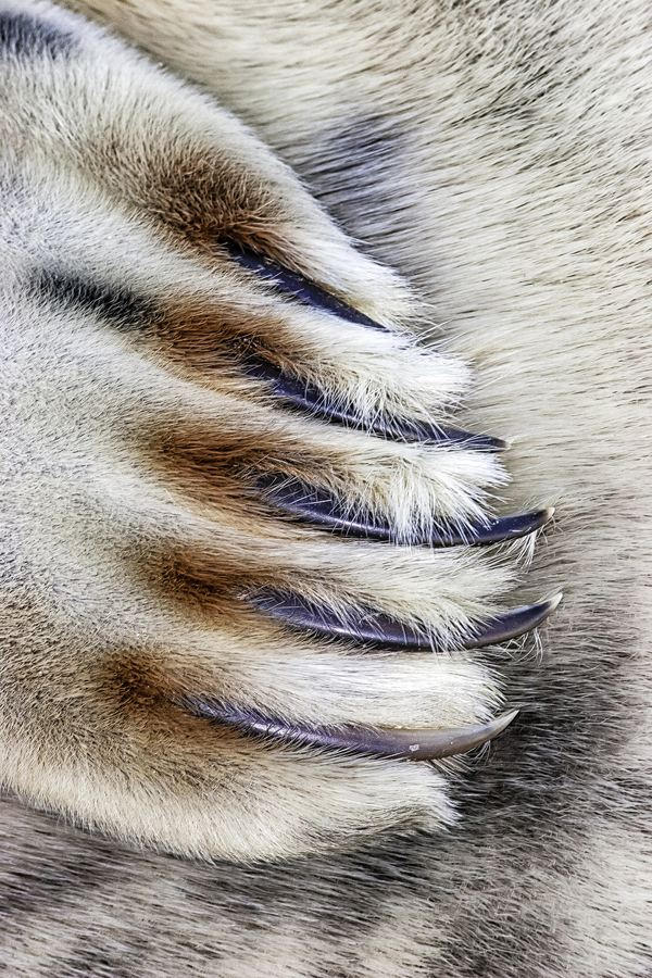 Jim Greenfield's close-up image of a grey seal claw won the 'Close to Nature' category. The picture was taken in Lincolnshire (PA/British Wildlife Photography Awards 2014/Jim Greenfield)