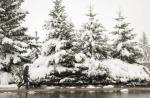 A woman walks her dog past snow laden trees as snow continues to fall in Cremona, Alta., Tuesday, Sept. 9, 2014. Environment Canada issued a snowfall warning for Calgary, and much of the rest of Southwestern Alberta. THE CANADIAN PRESS/Jeff McIntosh