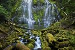 Proxy Falls cascade down towards the moss-covered forest of Three Sisters Wilderness in Oregon. (Thomas Goebel, age 18, Jensen Beach, Florida, USA/Courtesy of National Museum of Natural History)