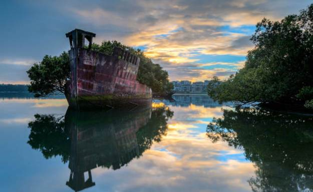 Floating forest, Sydney, Australia [paradisepin.com]