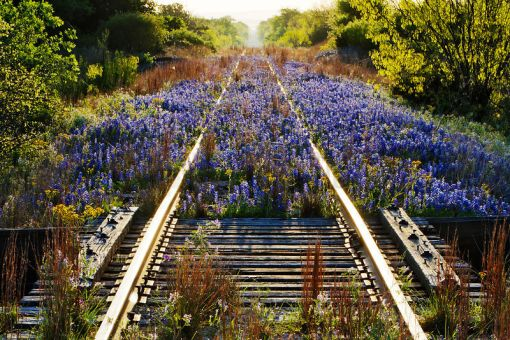 Abandoned railway track in Texas