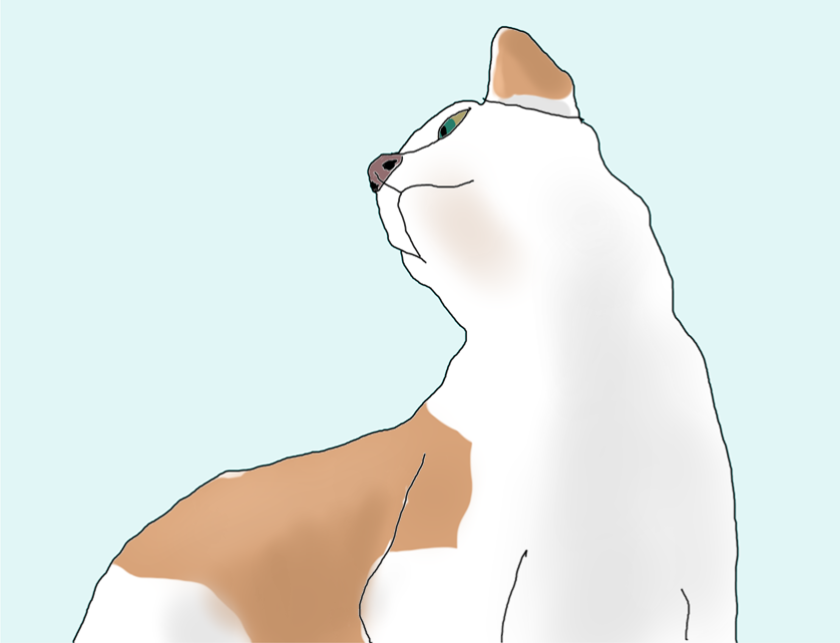 Apricot, the cat. My first drawing using the Wacom Intuos Creative Pen Tablet.