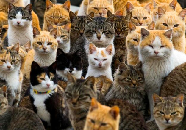 Cats crowd the harbour on Aoshima Island in the Ehime prefecture in southern Japan February 25, 2015. An army of cats rules the remote island in southern Japan, curling up in abandoned houses or strutting about in a fishing village that is overrun with felines outnumbering humans six to one. (REUTERS/Thomas Peter)
