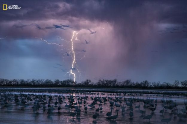 Lightning forks across the purple sky as hundreds of thousands of cranes roost in the shallows of the Platte River, Nebraska. (Randy Olson/National Geographic) Lightning forks across the purple sky as hundreds of thousands of cranes roost in the shallows of the Platte River, Nebraska. (Randy Olson/National Geographic) Lightning forks across the purple sky as hundreds of thousands of cranes roost in the shallows of the Platte River, Nebraska. (Randy Olson/National Geographic) Lightning forks across the purple sky as hundreds of thousands of cranes roost in the shallows of the Platte River, Nebraska. (Randy Olson/National Geographic) Lightning forks across the purple sky as hundreds of thousands of cranes roost in the shallows of the Platte River, Nebraska. (Randy Olson/National Geographic) Lightning forks across the purple sky as hundreds of thousands of cranes roost in the shallows of the Platte River, Nebraska. (Randy Olson/National Geographic) Lightning forks across the purple sky as hundreds of thousands of cranes roost in the shallows of the Platte River, Nebraska. (Randy Olson/National Geographic) Lightning forks across the purple sky as hundreds of thousands of cranes roost in the shallows of the Platte River, Nebraska. (Randy Olson/National Geographic) Lightning forks across the purple sky as hundreds of thousands of cranes roost in the shallows of the Platte River, Nebraska. (Randy Olson/National Geographic)