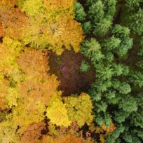 """""""My daughter and her best friend on their backs in a clearing, just between planted fir forest and natural beech forest."""" (Anders Andersson / National Geographic Nature Photographer of the Year contest)"""