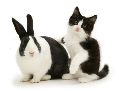 Black Dutch rabbit with black-and-white kitten Felix. (Photo: Warren photographic/Caters News)