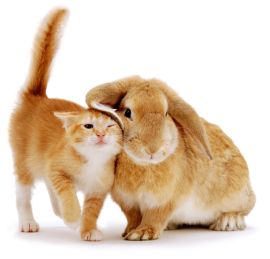 Ginger female kitten Sabrina scent-rubbing against a young sandy lop rabbit. (Photo: Warren photographic/Caters News)